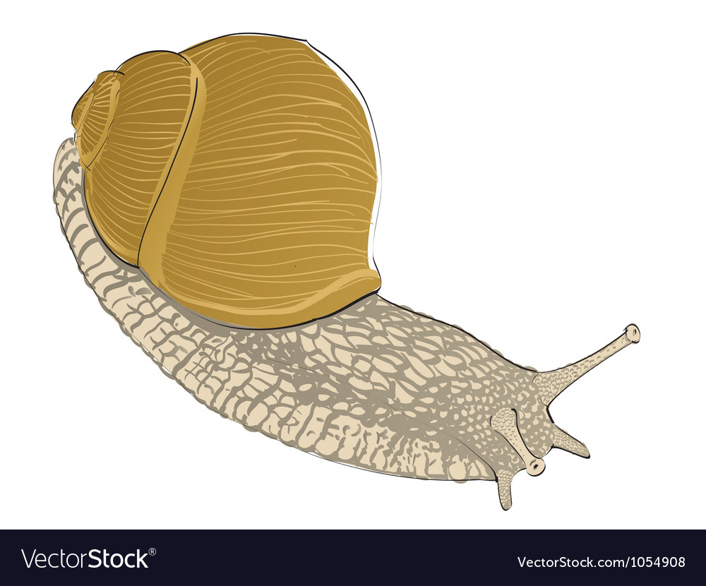 Snail graphic