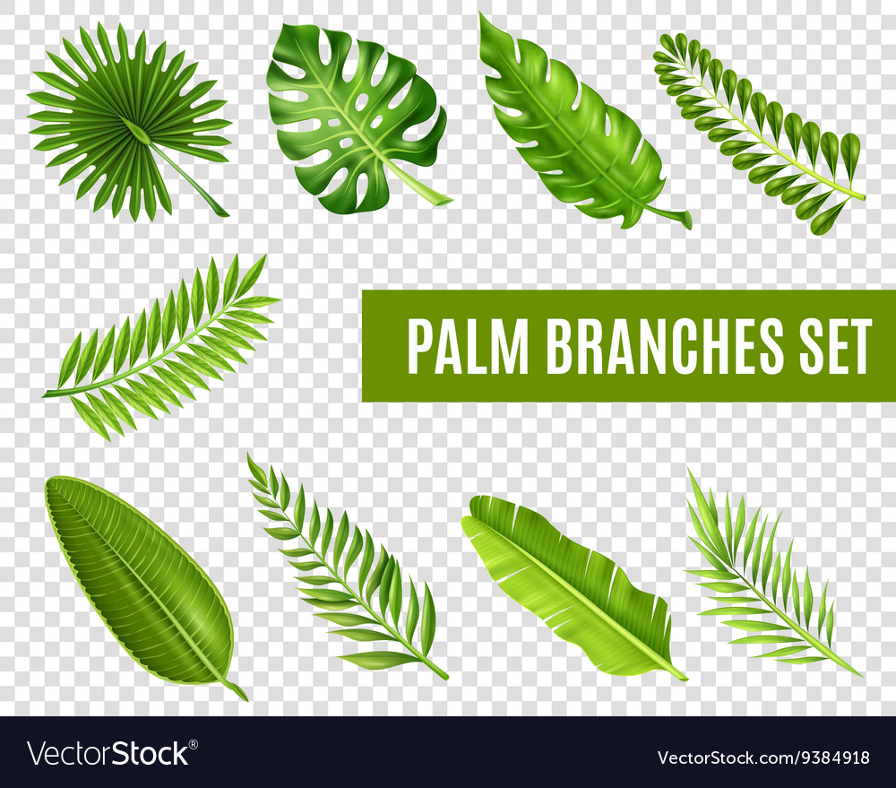 Palm Tree Branches Set vector image