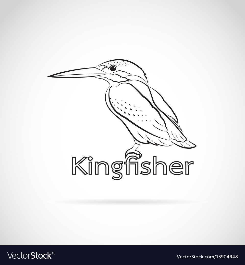 Common kingfisher alcedo atthis on white