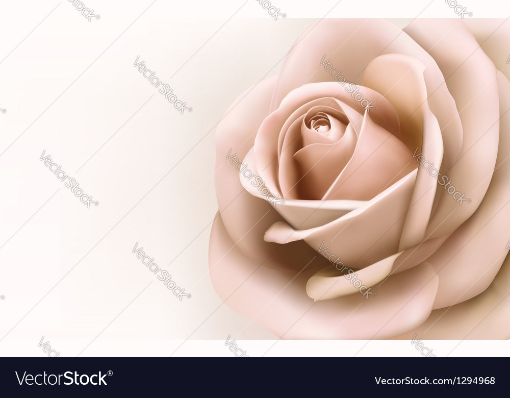 Background with beautiful pink rose
