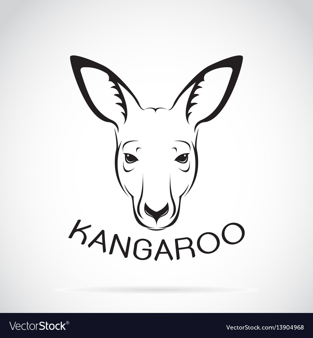 Kangaroo head on white background wild animals