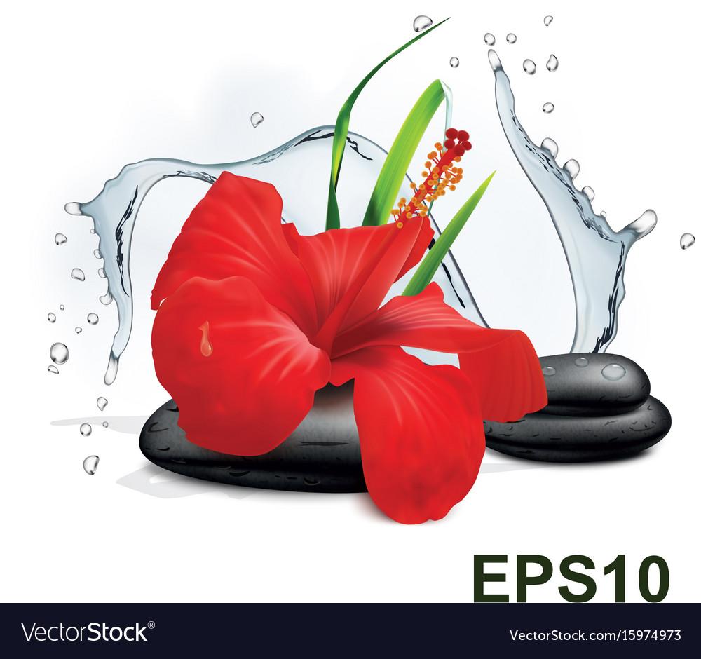 Hibiscus Flower Grass Water Splash And Zen Stone Vector Image