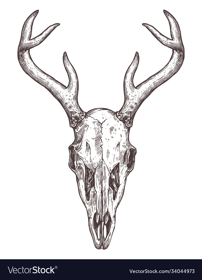 Sketch deer skull boho hand drawn