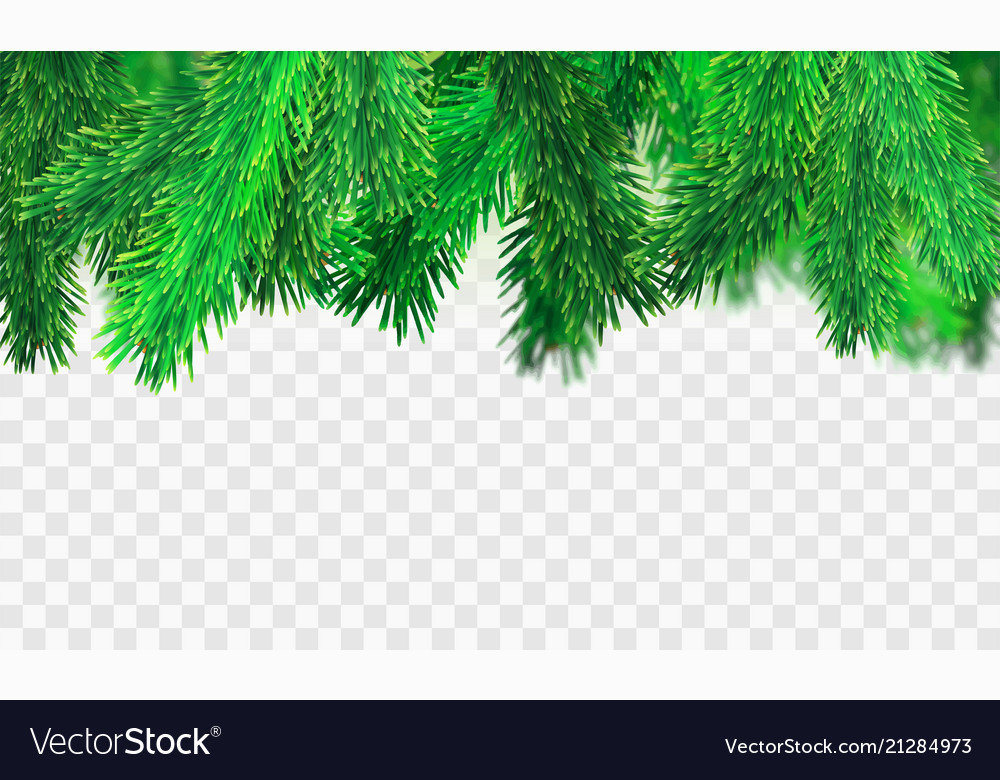 Christmas Branch Vector.Stock Christmas Tree Branches