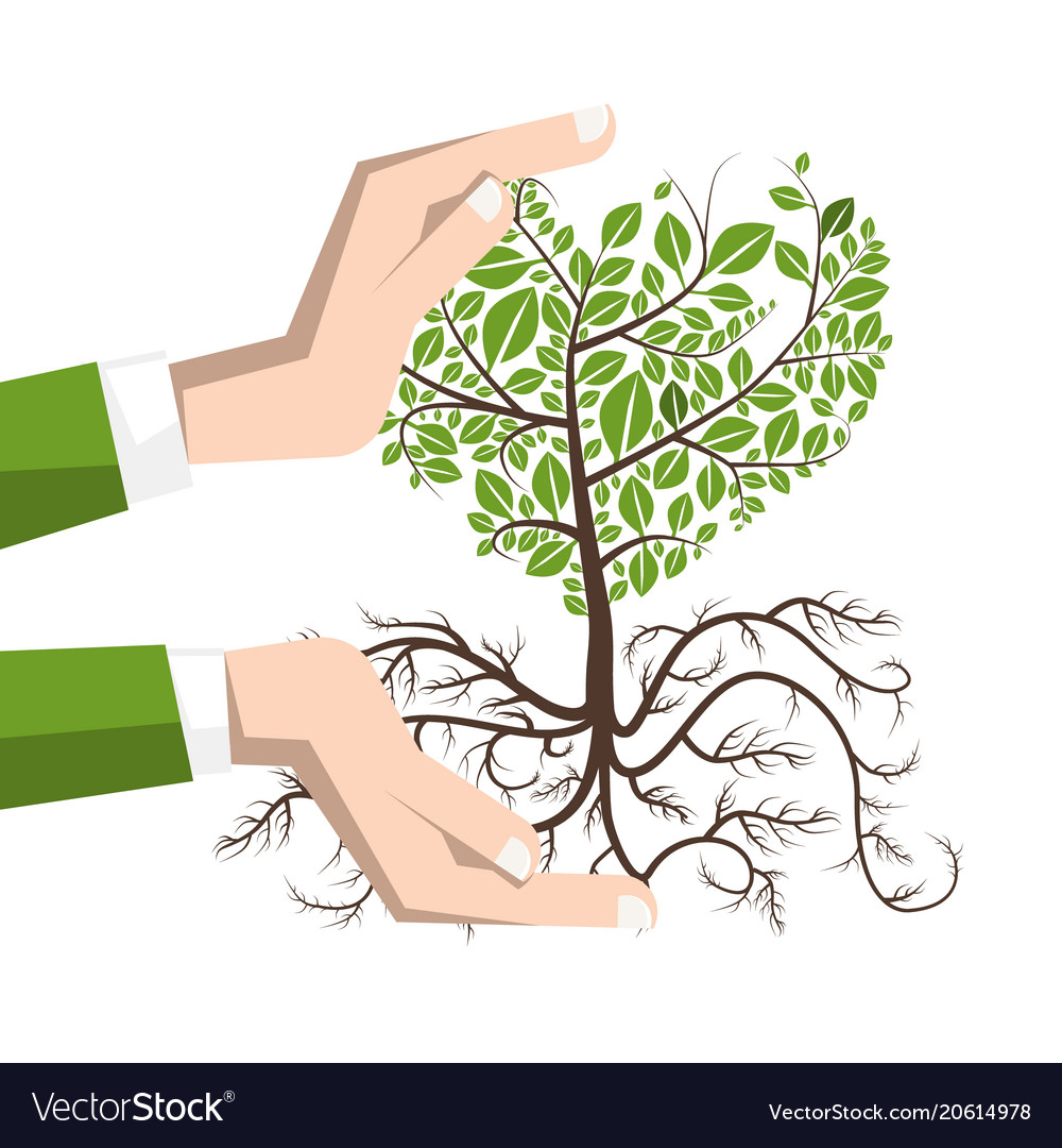 Planting a tree with roots plant in human hands