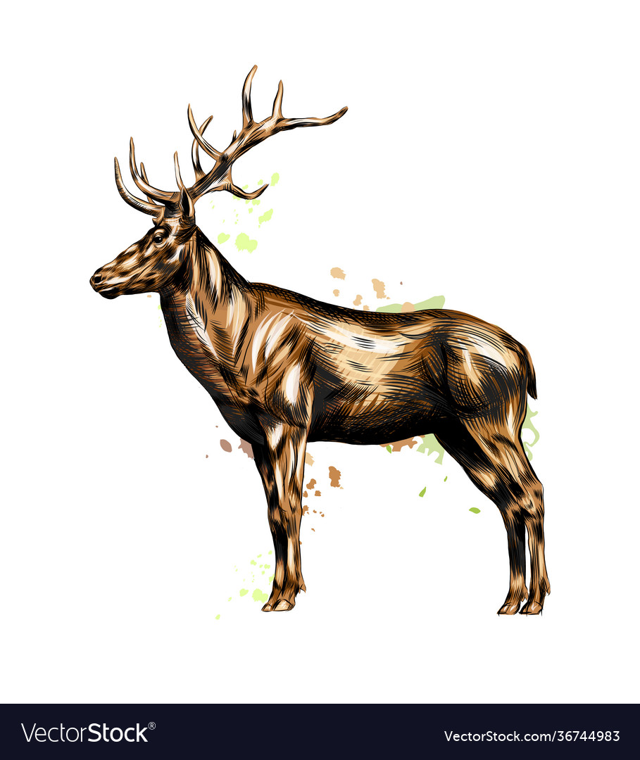Red deer from a splash watercolor colored