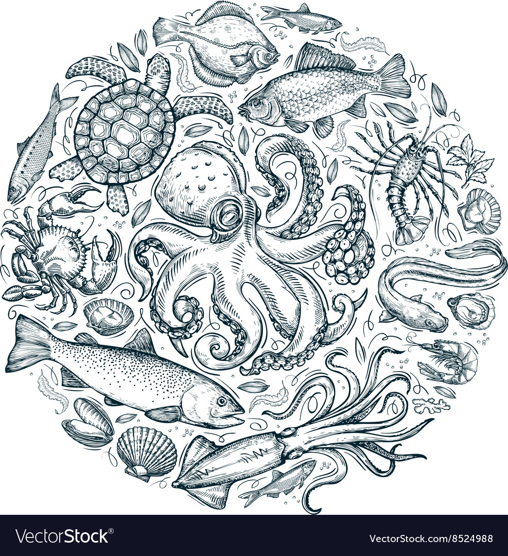Marine animals or seafood hand drawn sketches vector image