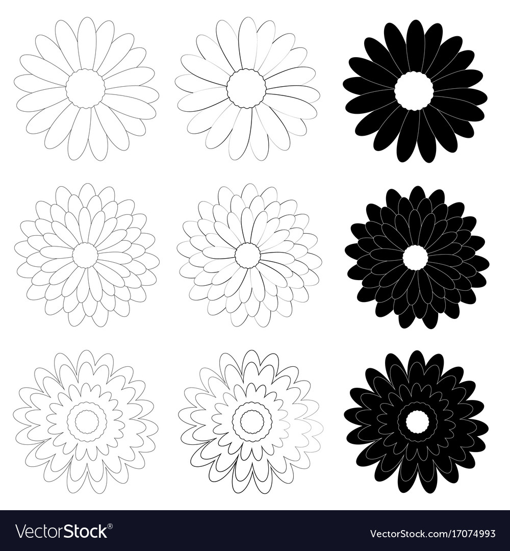 Black and white daisy flower on white background