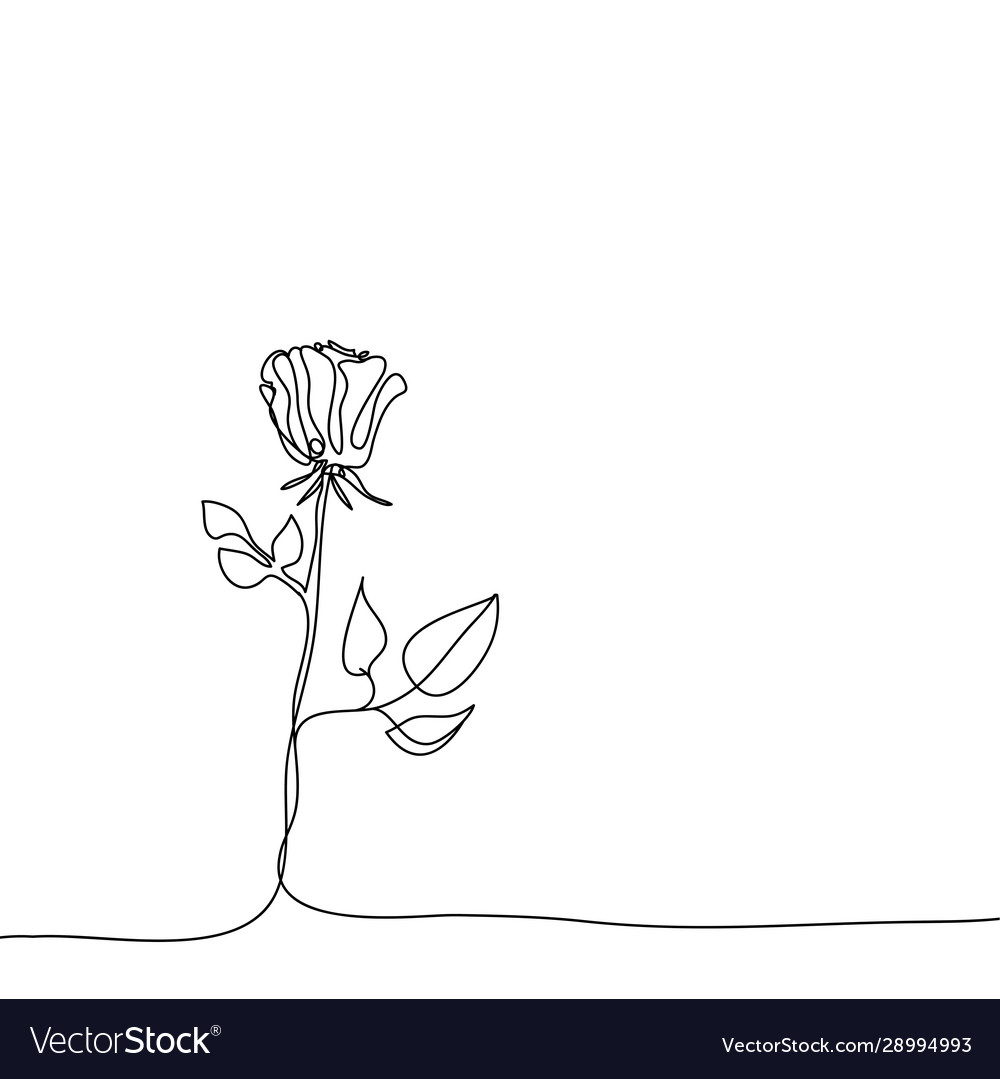 Realistic elements outline rose