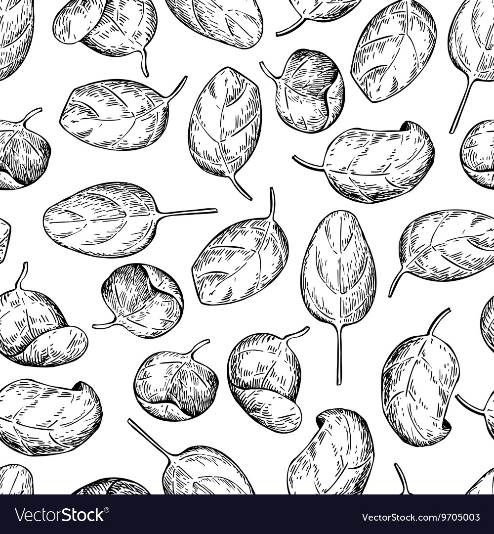 Spinach leaves hand drawn seamless pattern