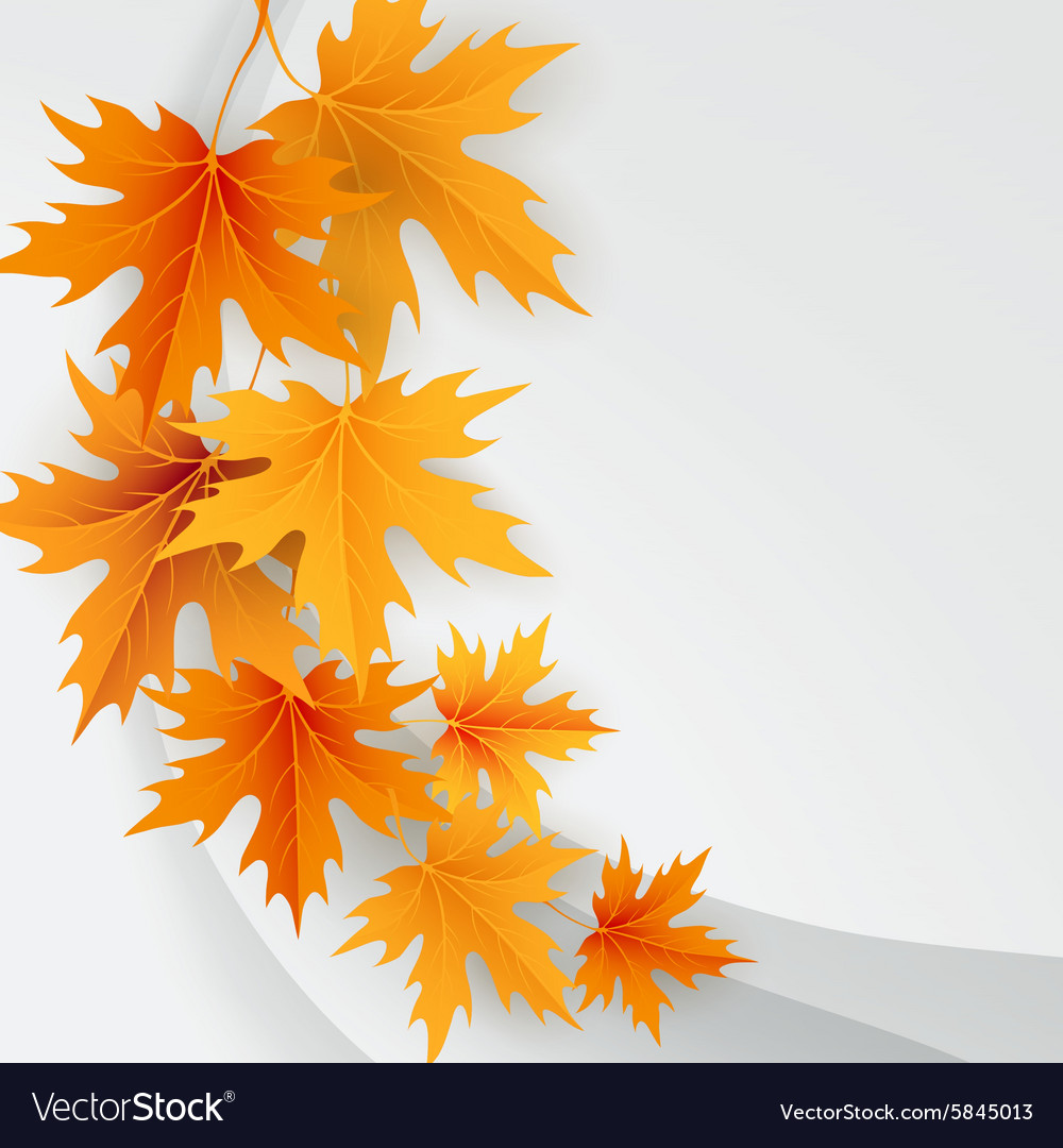 autumn maples falling leaves background royalty free vector