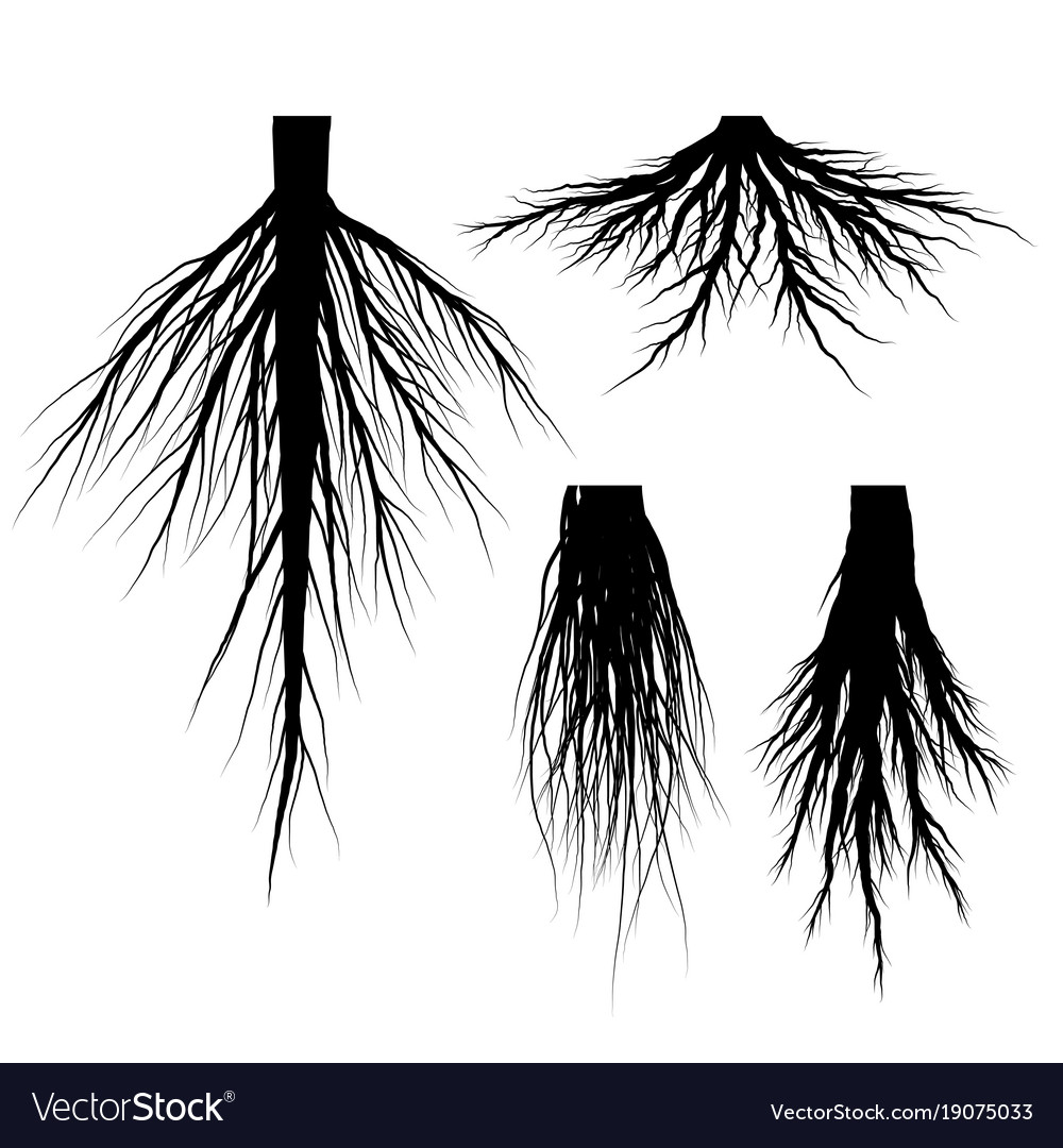 Silhouette tree roots set