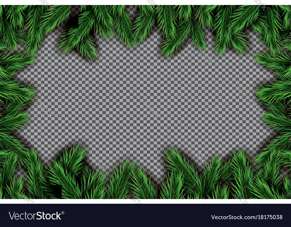 Fir branch on transparent background