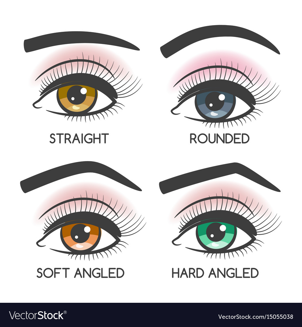 Popular female eyebrows shape set vector image