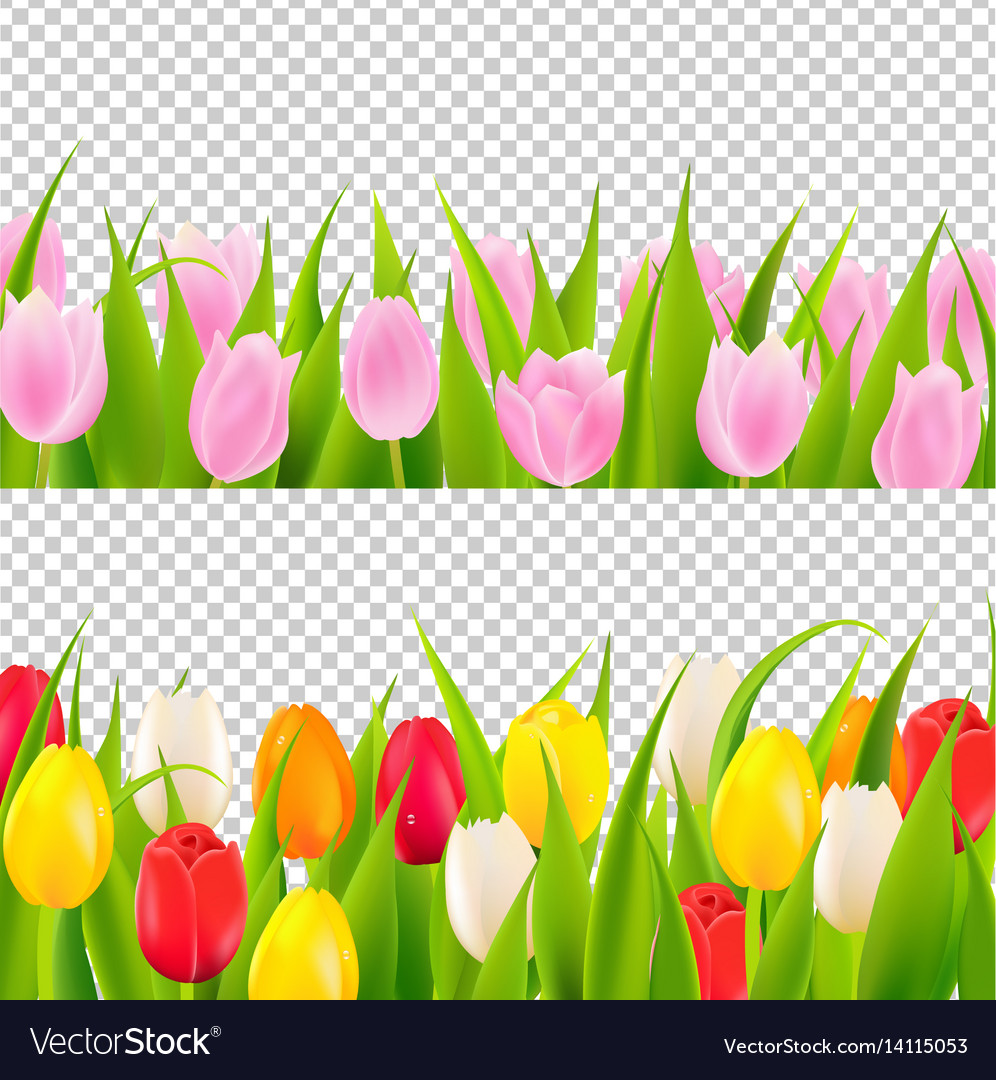 Tulip border with transparent background Vector ImageTulips Page Borders Clipart Free