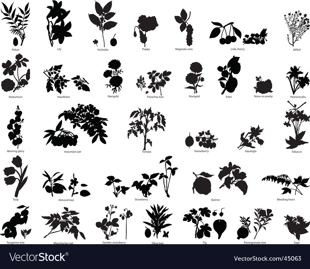 Berries and flowers silhouettes vector image
