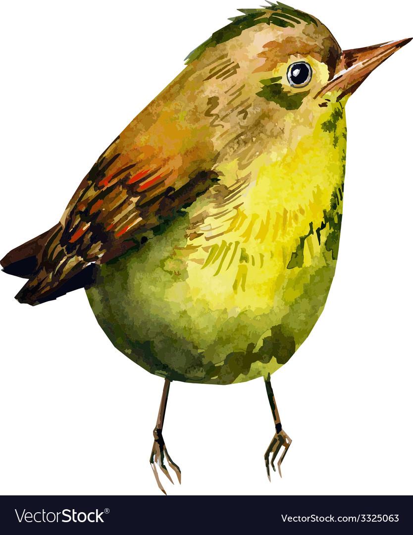 Cute birds for your design watercolor vector image