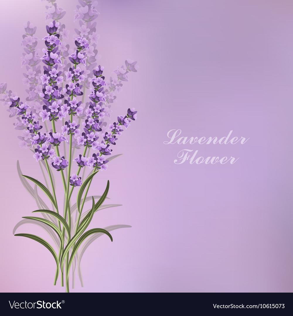 Beautiful Lavender Flowers On Violet Background Vector Image Free brushed metal tileable twitter backgrounds » backgrounds etc. vectorstock