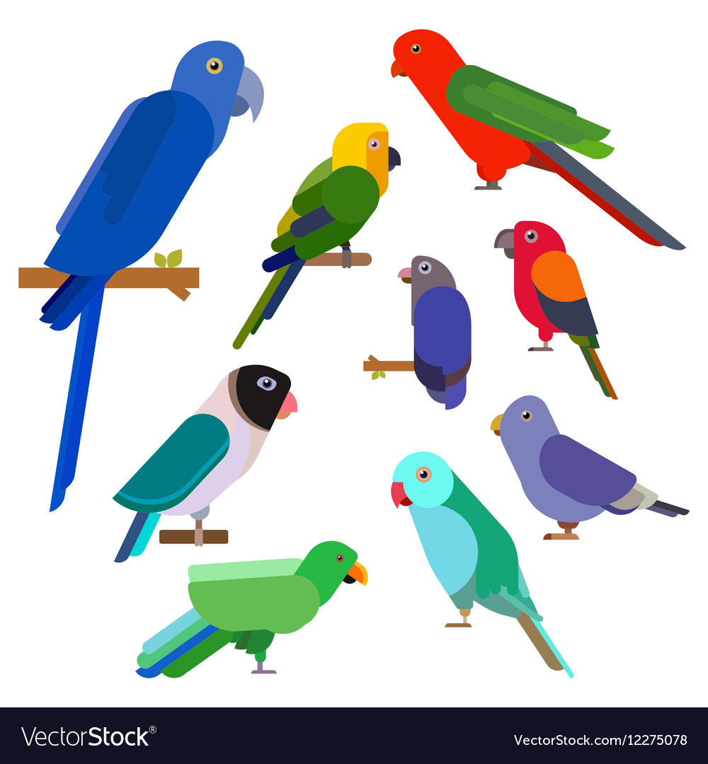 Cartoon parrots collection parrot wild animal