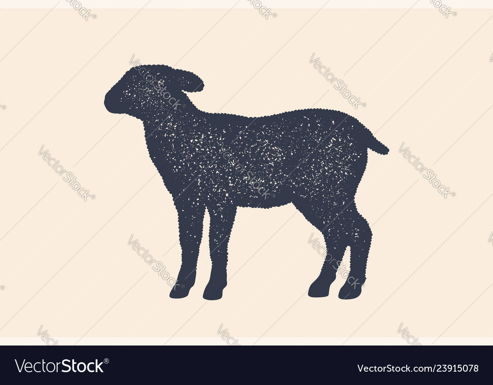 Lamb sheep concept design of farm animals