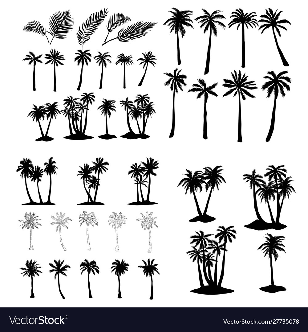 Palm tropical tree set icons black silhouette