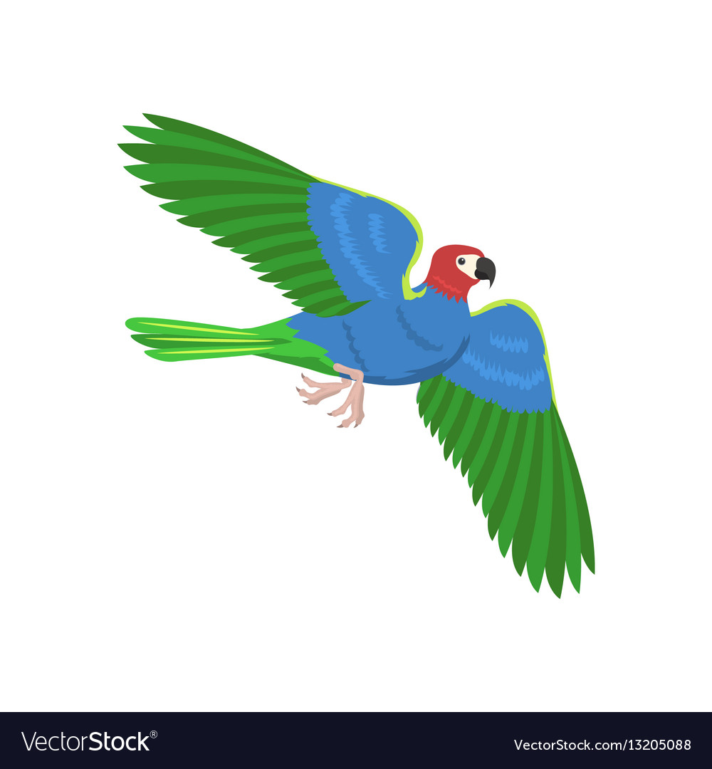 Cartoon parrot flying bird vector image