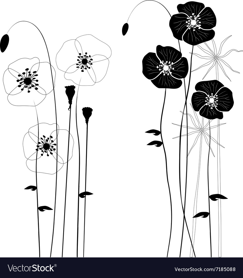 Collection wild plant poppy vector image