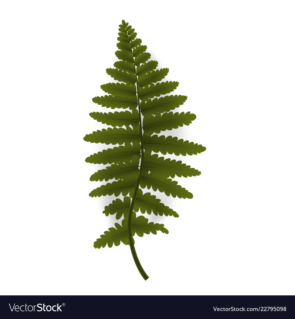 Colorful green twig fern vector
