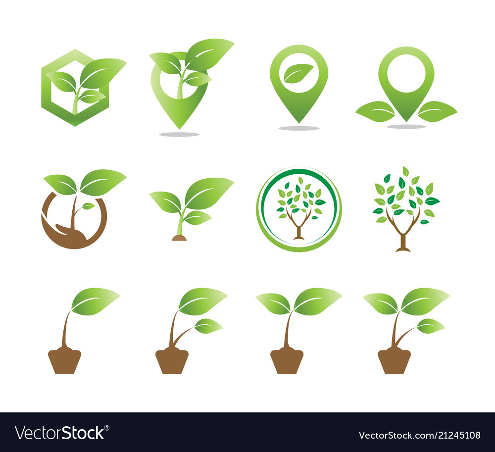 Collection of plant logo icon template