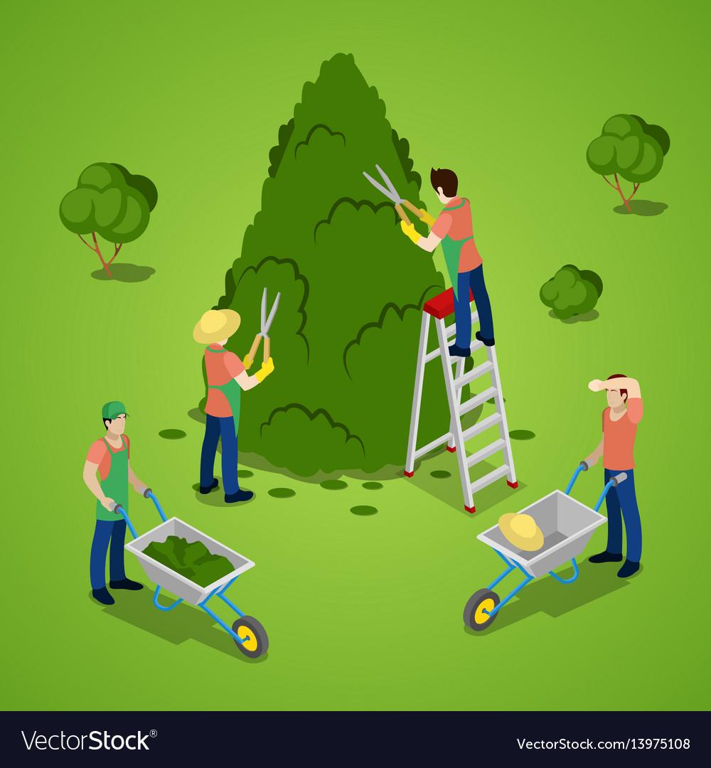 Isometric people trimming tree gardener working vector image