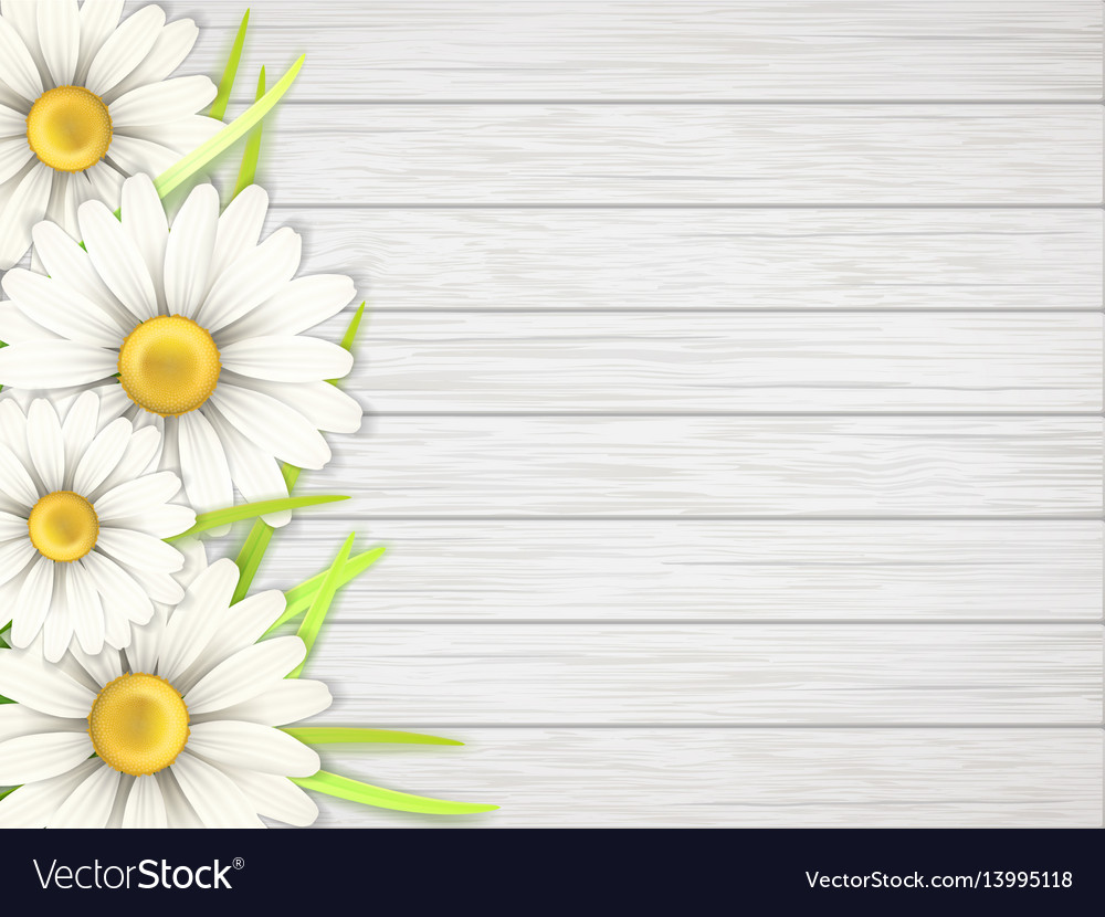 Camomile flowers on wooden desk