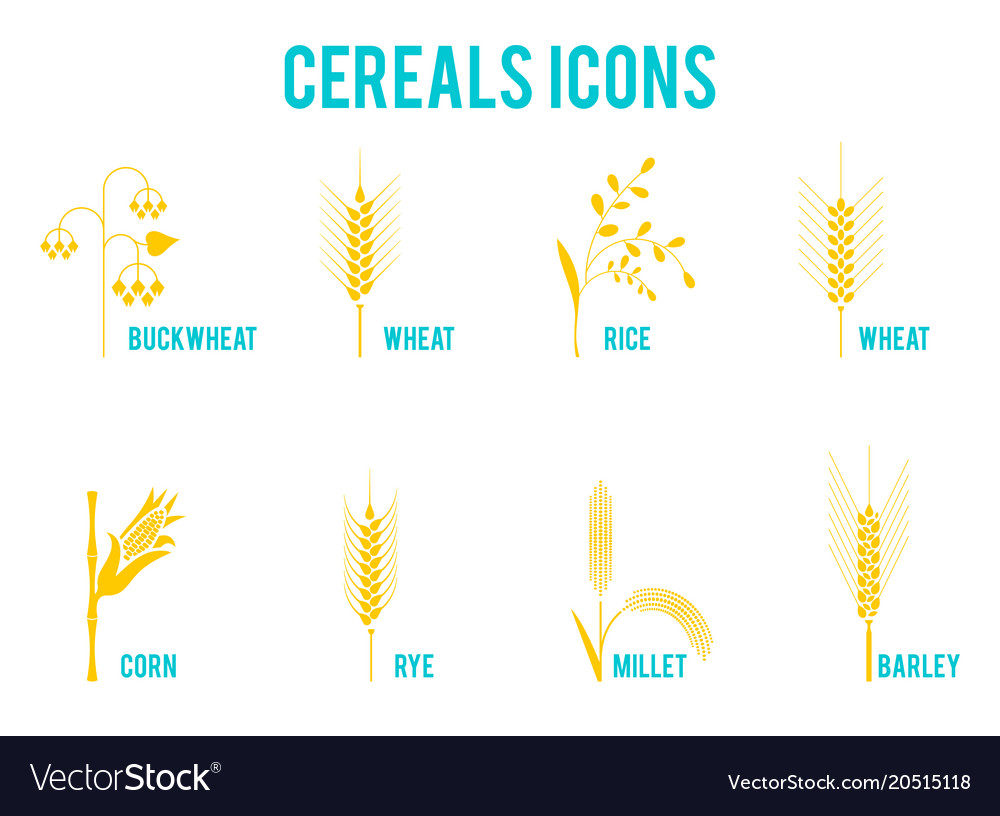 Cereals icons of grain plants