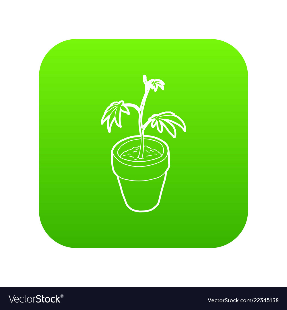 Cannabis plant icon green