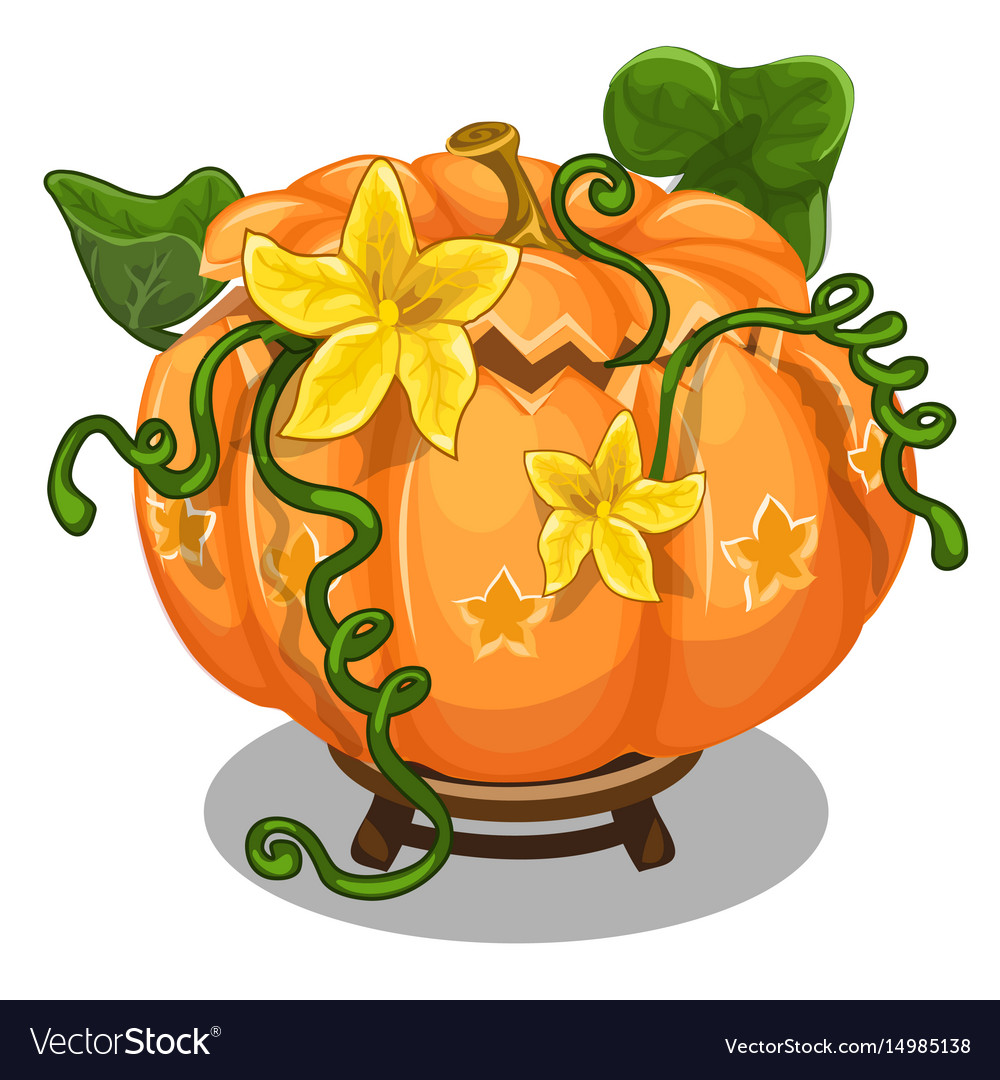 Large ripe pumpkin with green leaves and flowers