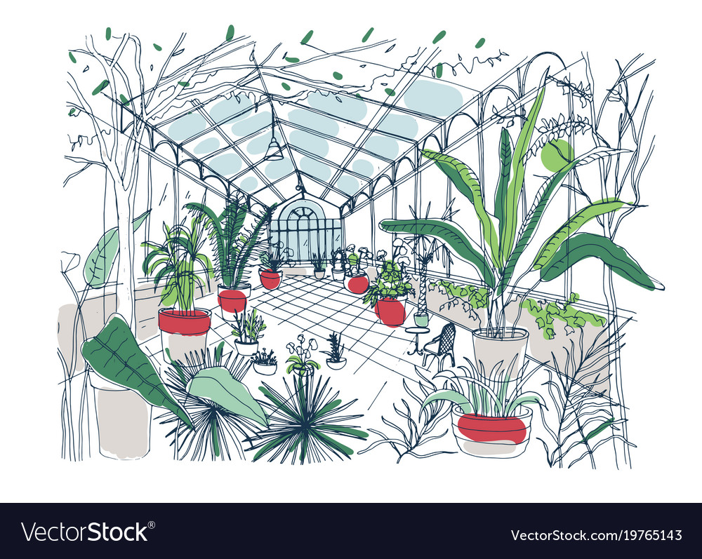Freehand Drawing Of Interior Of Botanical Garden Vector Image