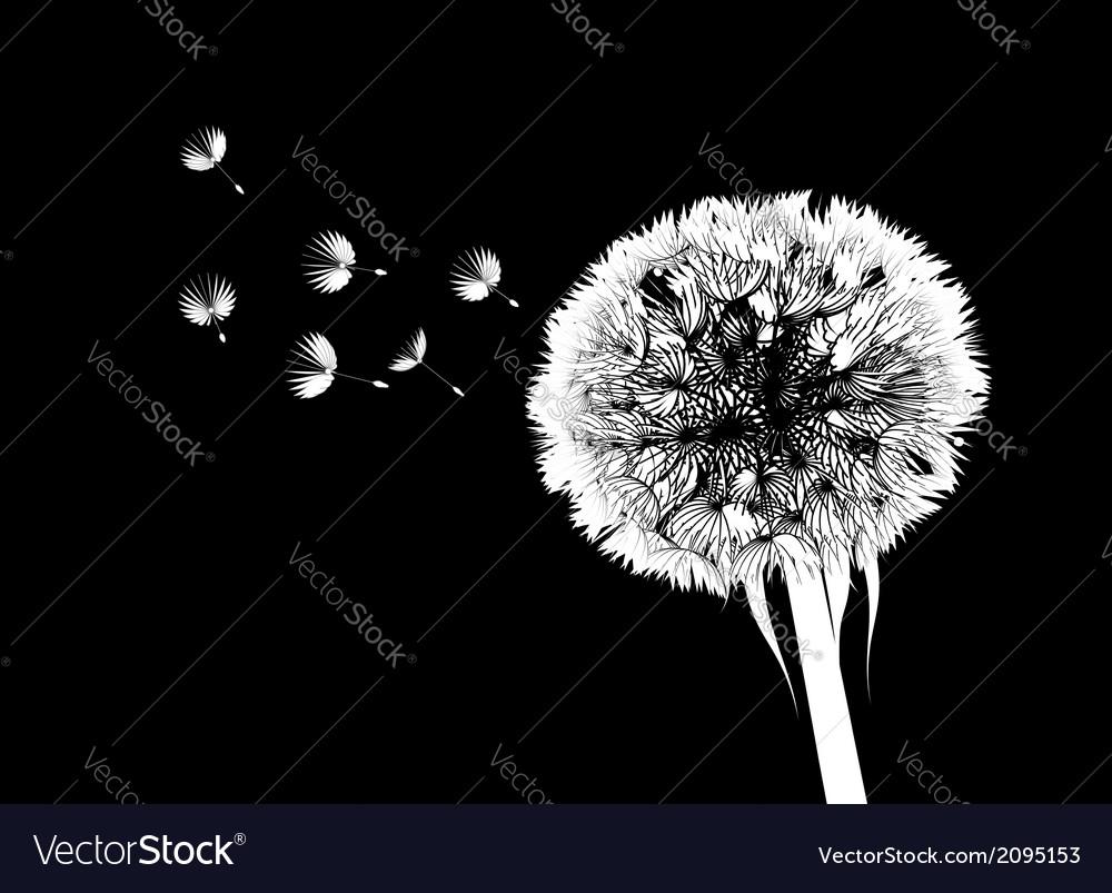 Dandelion flower vector image