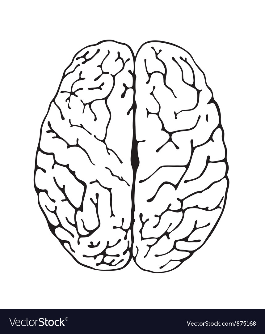 Brain a top view