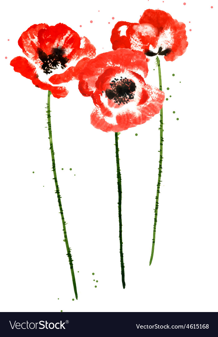 Collection of watercolor poppy flowers royalty free vector collection of watercolor poppy flowers vector image mightylinksfo