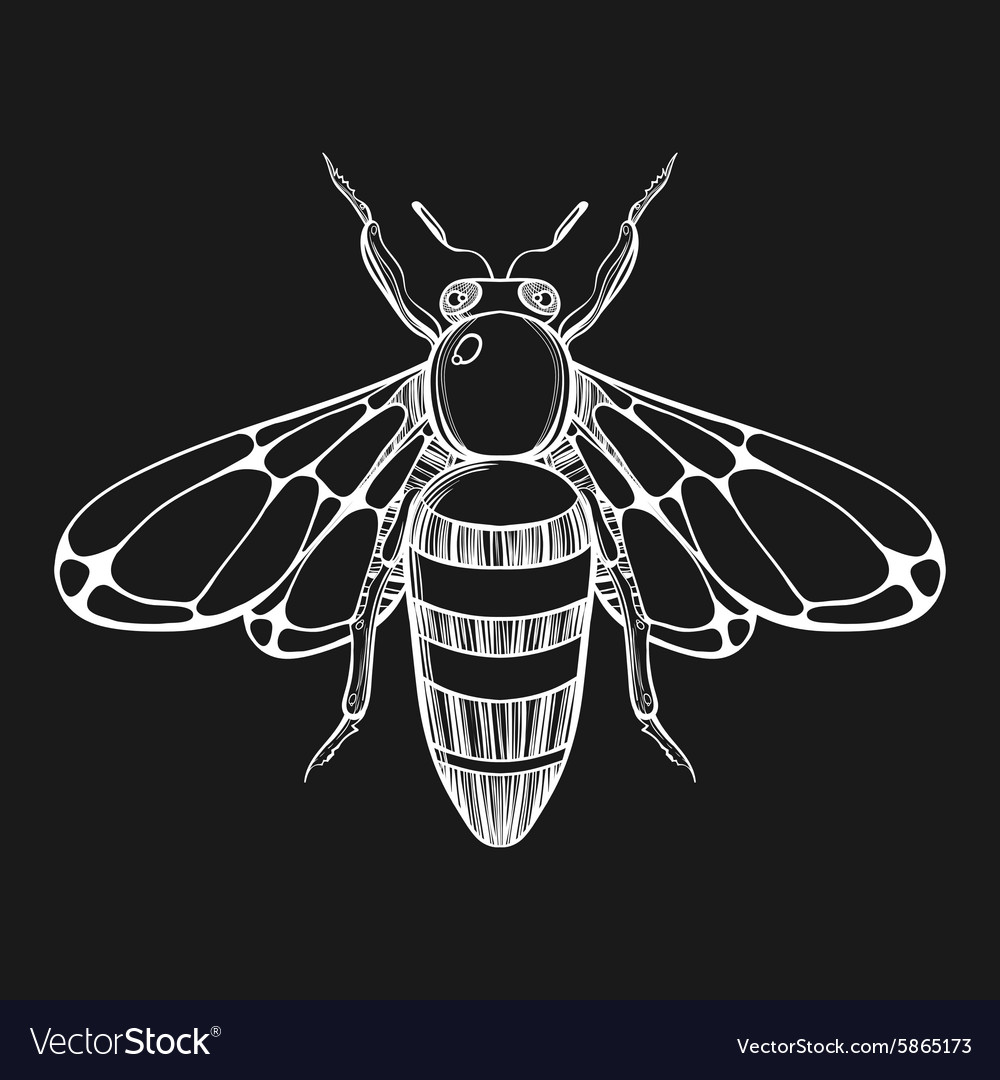 Hand drawn engraving Sketch of Bee for tattoo