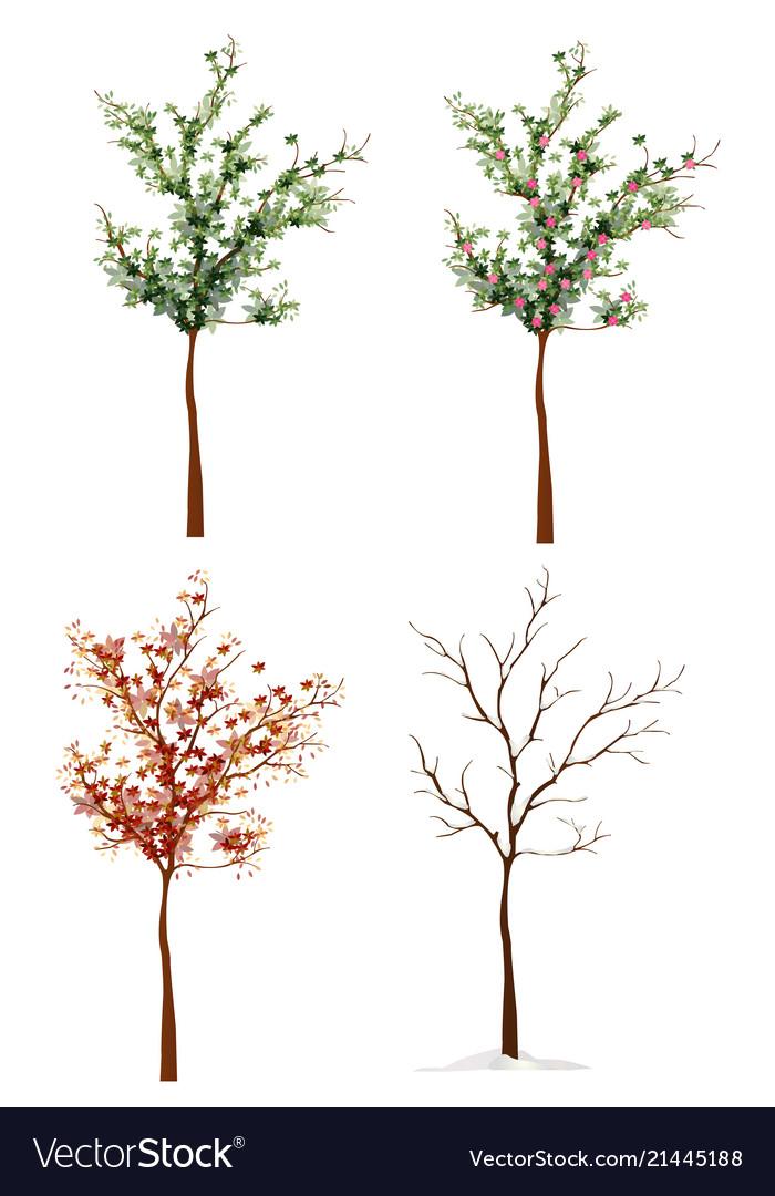 Four-seasons trees