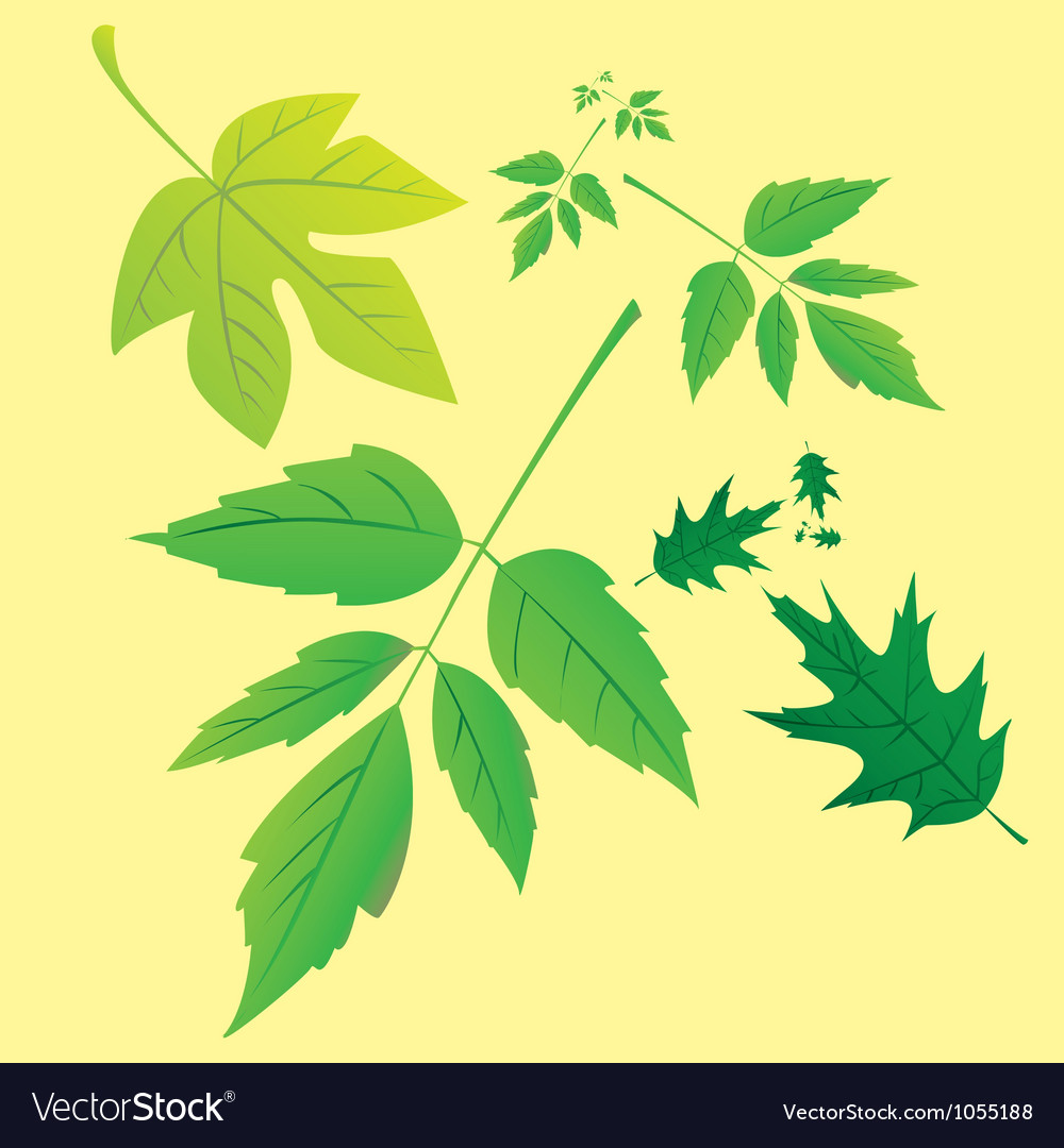 Nature leaves