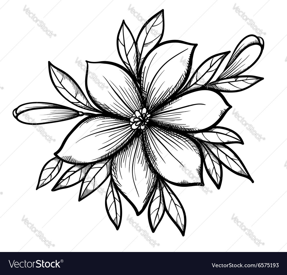 Lily branch with leaves and buds vector image