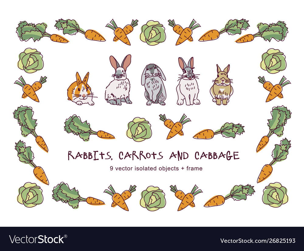 Rabbits carrots cabbage and border isolate objects