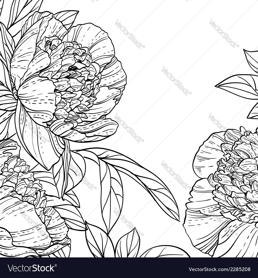 Peonies black line art background