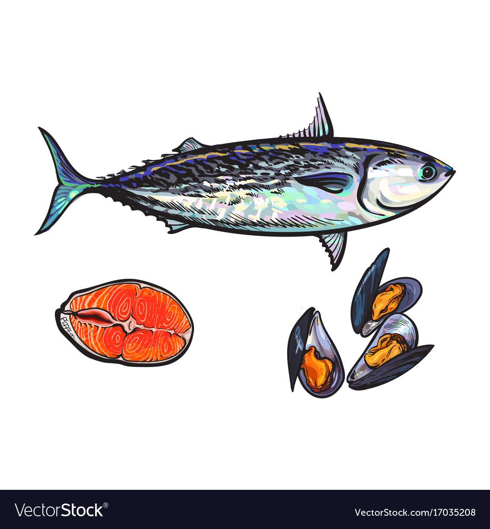 Sketch fish tuna salmon steak mussels