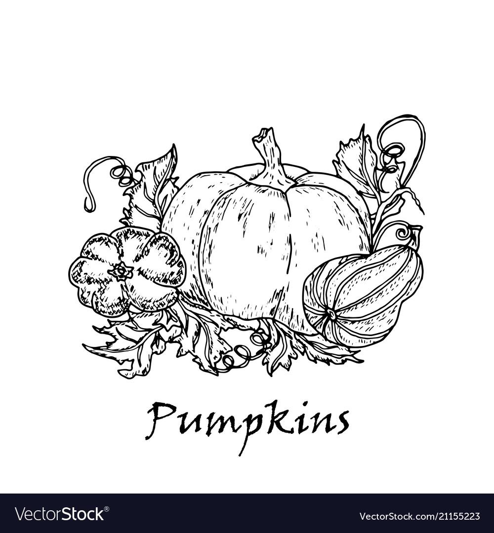 Hand drawn of three pumpkins vector image