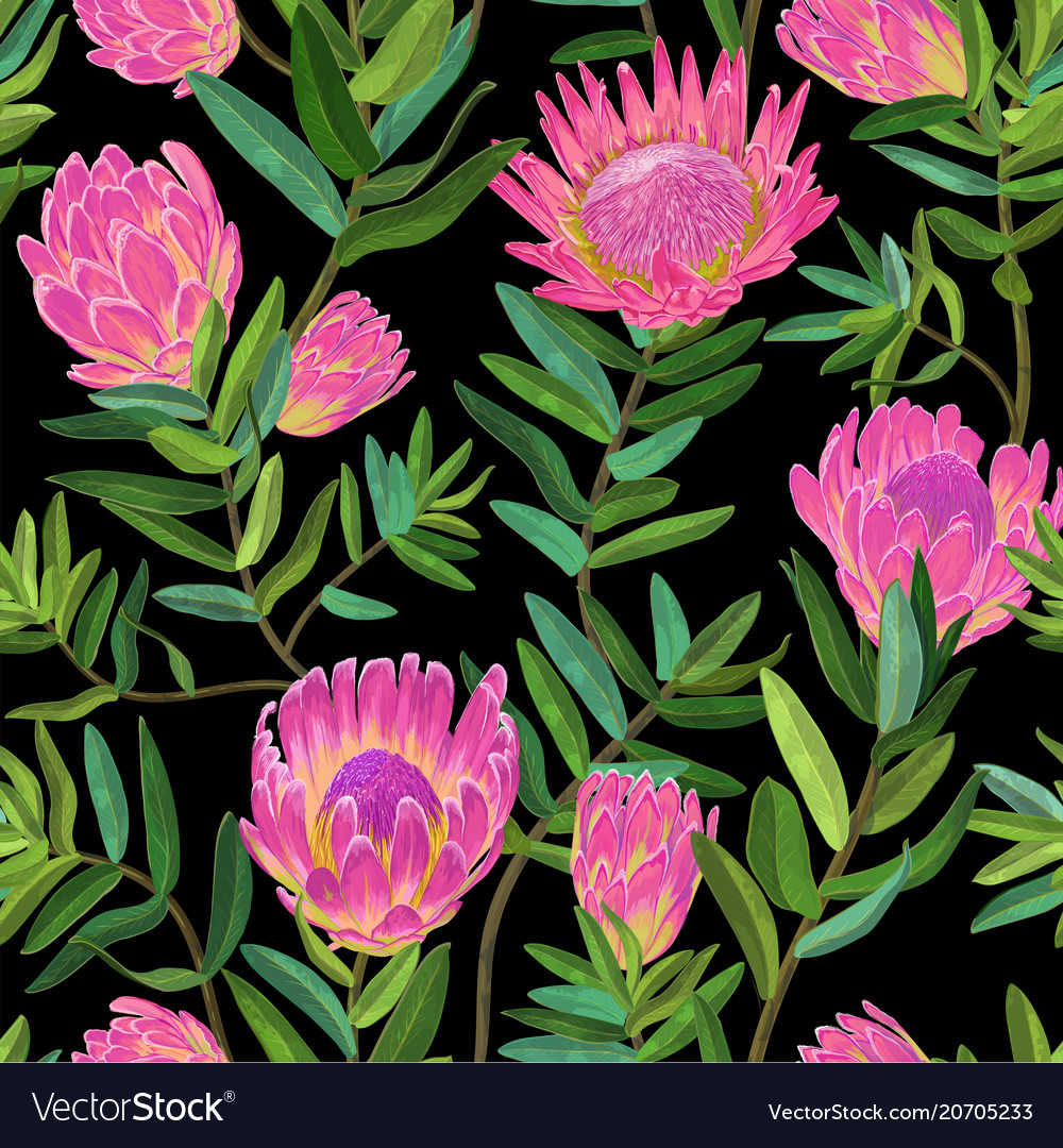 Floral seamless pattern with protea flowers