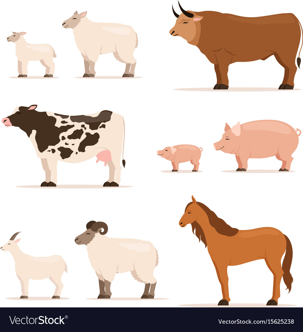 Animals on farm lamb piglet cow and sheep goat