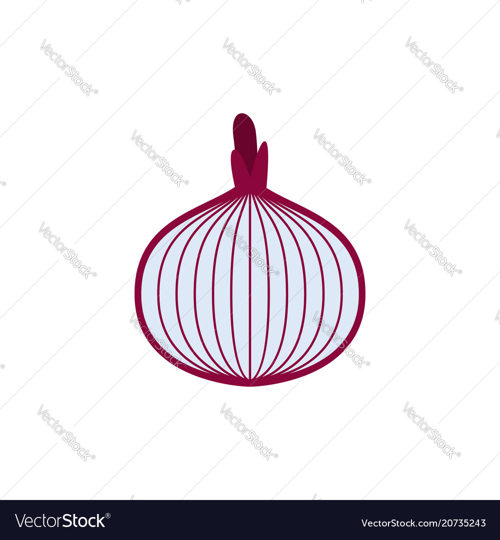 Onions cut isolated vegetable slice on white