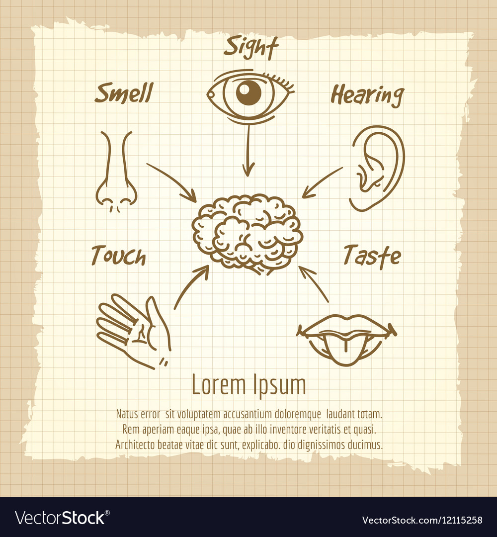Human sense organs synopsis vintage poster Vector Image